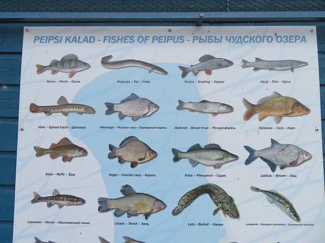 Peipsi kalad / Fish of Peipus, Estonia