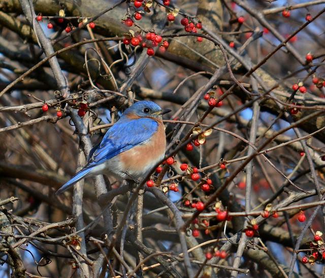 Sunshine and Berries, Montgomery County, PA USA