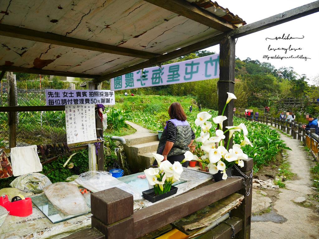 台北陽明山竹子湖海芋大道竹屯星海芋農園採海芋推薦價錢 (2)