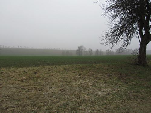 20110316 0203 334 Jakobus Bäume Feld Nebel
