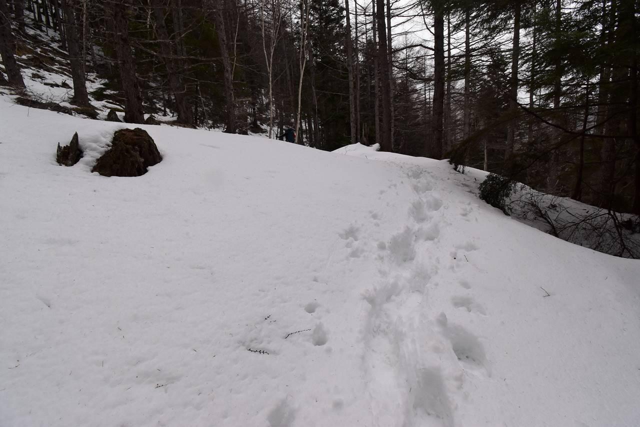 三伏峠までの登山道の雪