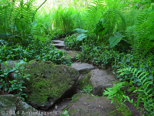 Stepping stones that take you further into the Japanese Garden at the Willowwood Arboretum, Morris County, New Jersey