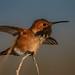 Landing on the twig