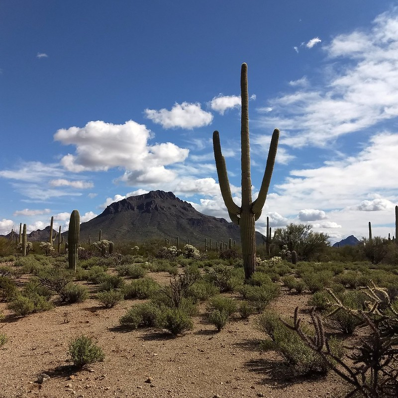 2019-02-16 -- view from the Blue course at Ironwood Picnic Area, Tucson, AZ.