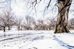 Riverside Park - Winter 2018-19-66.jpg