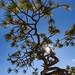 Ponderosa Pine Surviving among the Rocks of El Morro National Monument by Lee Rentz