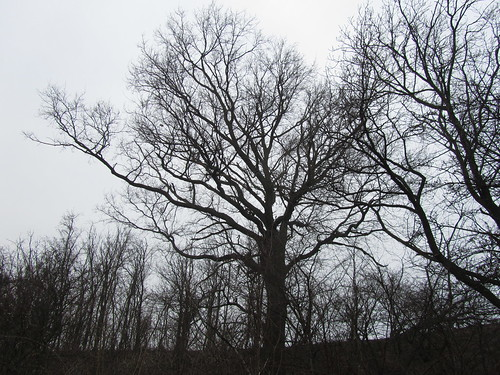 20110315 0202 069 Jakobus Bäume