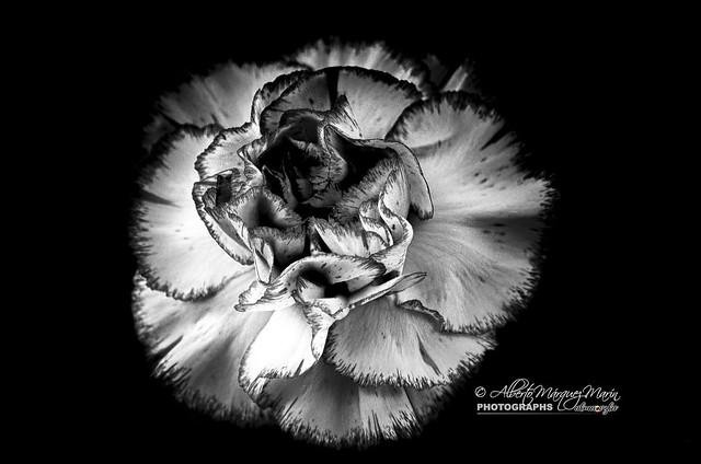 Flowers by Alberto Marquez, Nikon D7000, AF-S DX VR Zoom-Nikkor 55-200mm f/4-5.6G IF-ED