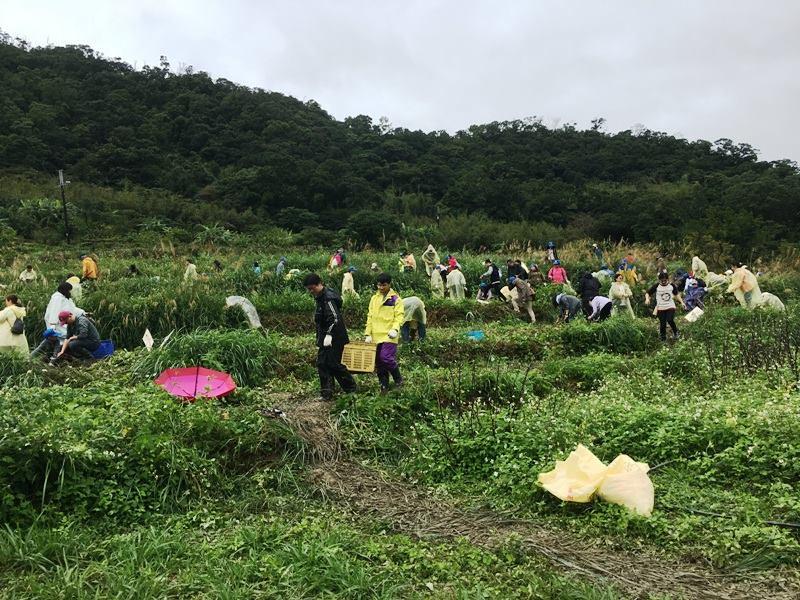 志工們上山幫忙挖地瓜義賣。