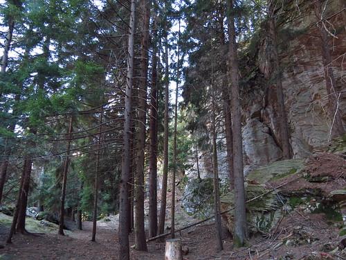 Le chant silencieux de la forêt