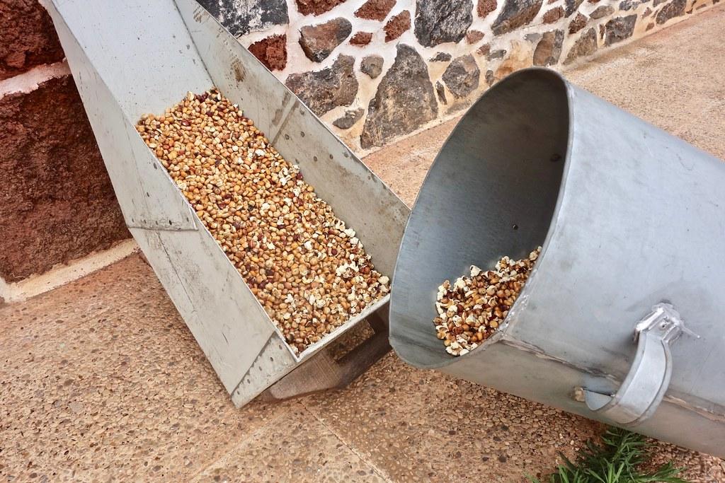 Museo del Gofio a Fuerteventura - Mais tostato