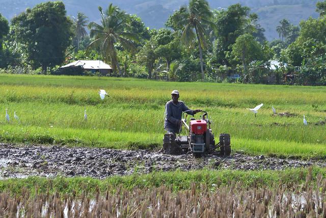Photo:海地全國稻種生產強化計畫 By 國際合作發展基金會(TaiwanICDF)