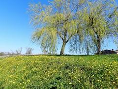 Fleurs des talus et des vignes - Photo of Saint-Estèphe