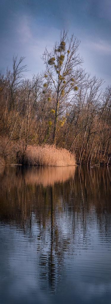 """En attendant le printemps au bord de l'étang... +""""recadrage"""" 33334549578_1cbe259973_b"""