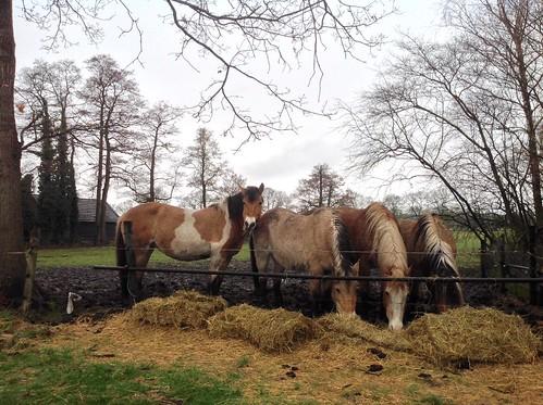 Een regendag ook niet fijn voor deze mooie paarden - Foto: Tiny Post.