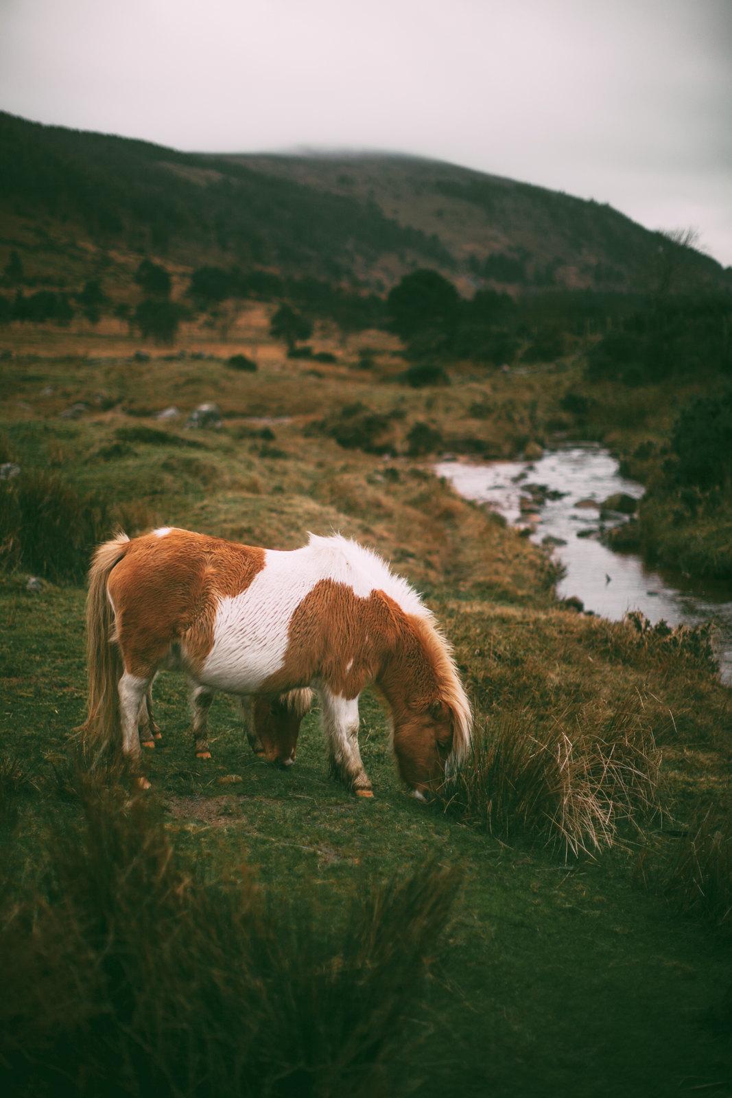 pony-7