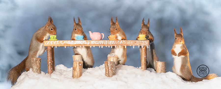 red squirrels are standing around an table with cups