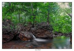 Début de saison des pluies, l'eau ruisselle dans la forêt...
