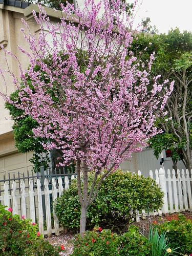 2019-03-04 - Outdoor Photography - Nature - Tree and Flower Colors