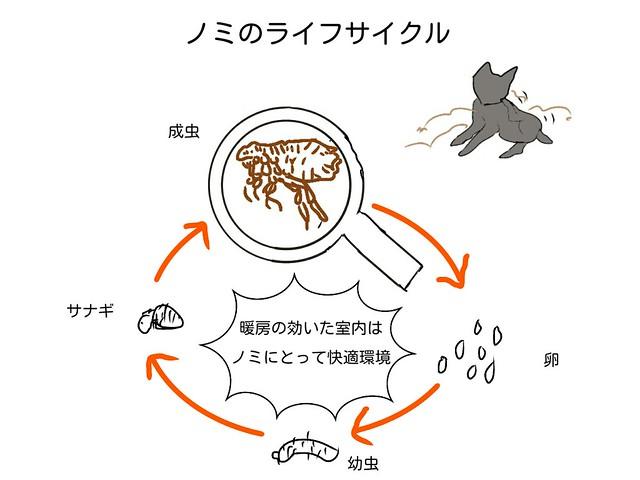 犬に寄生するノミのライフサイクル