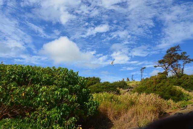 DSC_2440, Nikon D600, AF-S VR Zoom-Nikkor 24-85mm f/3.5-4.5G IF-ED