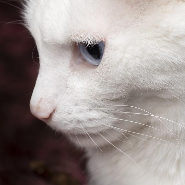 Cosmo close up