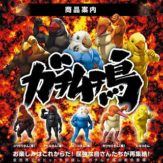 擁有大肌肌的超狂猛鳥再次集結!MEDICOM TOY 轉蛋「戰鬥筋肉鳥2(ガチムチ鳥2)」03月登場!