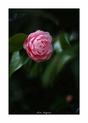 2019/2/11 - 2/12 photo by shin ikegami. - SONY ILCE‑7M2 / Voigtlander NOKTON CLASSIC 40mm f1.4 SC VM