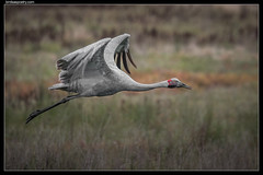 Brolga: At liftoff
