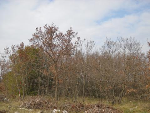 tagli boschivi in area protetta
