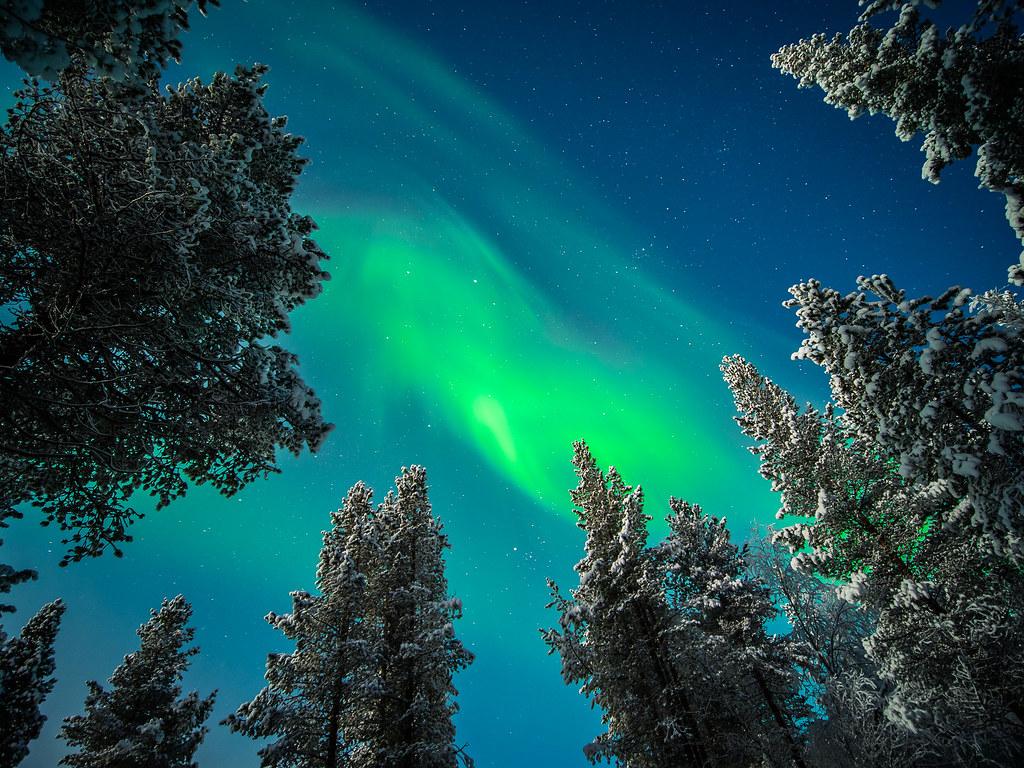 The Aurora Borealis, Ivalo, Lapland picture