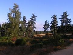 20080907 31690 1008 Jakobus Wald Weg Bäume - Photo of La Chaze-de-Peyre