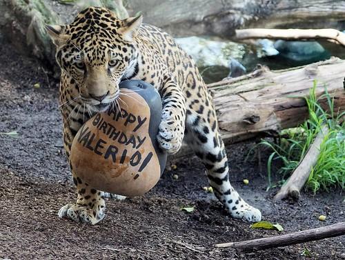 Valerio birthday (San Diego)