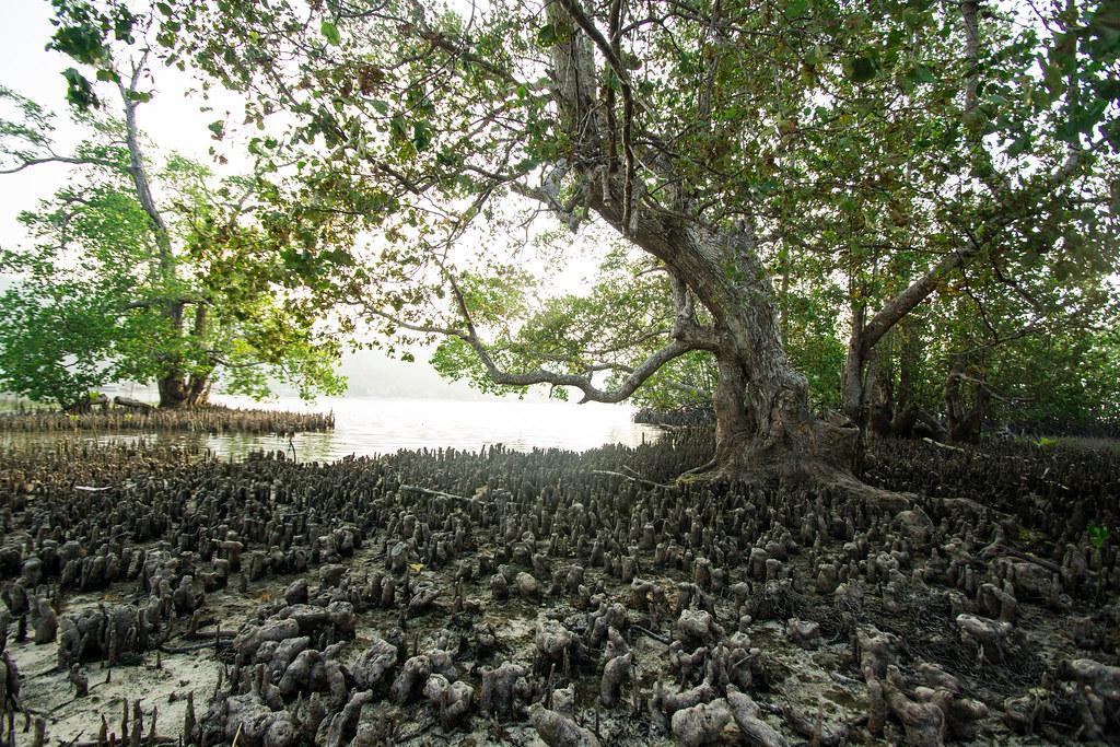 West Waigeo Island