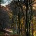 Hampshire in Autumn-23