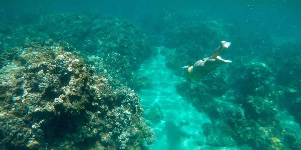 la grande barrière de corail australienne menacée