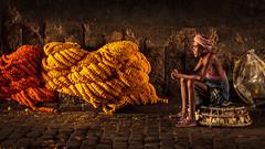 Marigold - Kolkata, India