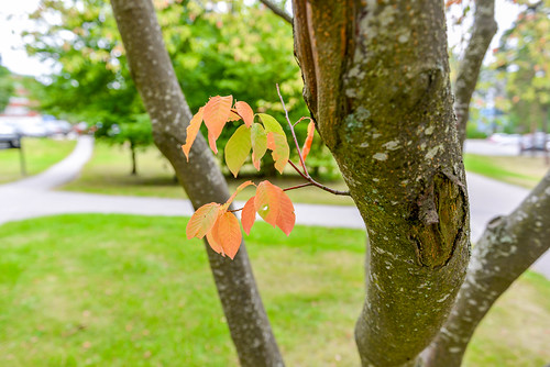 Leaves Growing on Tree