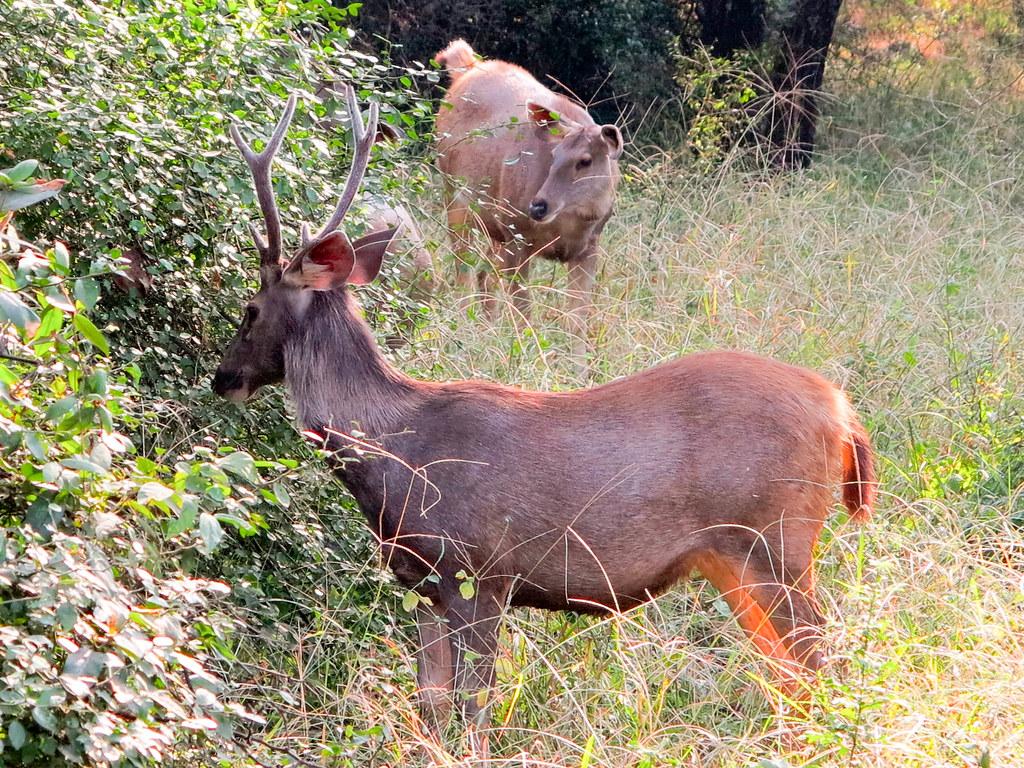 Reserva de Tigres de Bengala