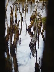 Tarbeker Moor