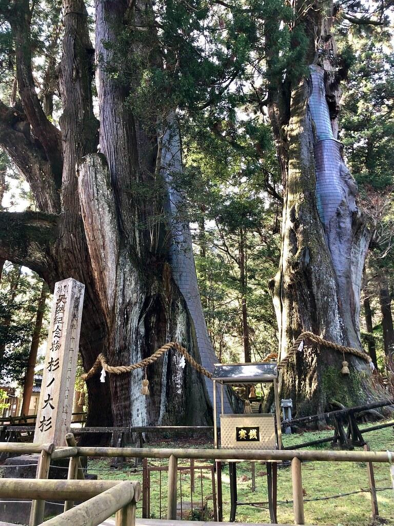 Sugi-no-Osugi
