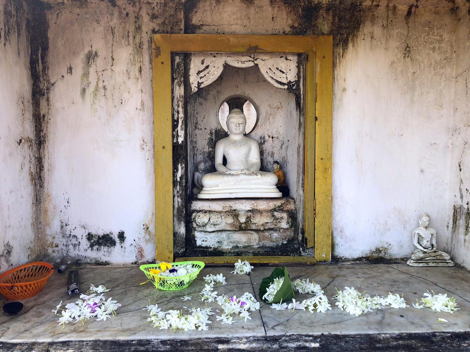 Aukana, la estatua de Buda más alta de Sri Lanka buda de aukana - 46781553601 e14fe5dac6 h - Buda de Aukana, la estatua de Buda más alta de Sri Lanka