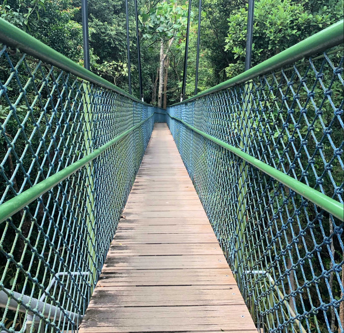 Hiking and Walking in Singapore: Tree Top Walk