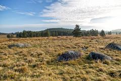 Plateau de Millevaches : Tourbière du Longeyroux