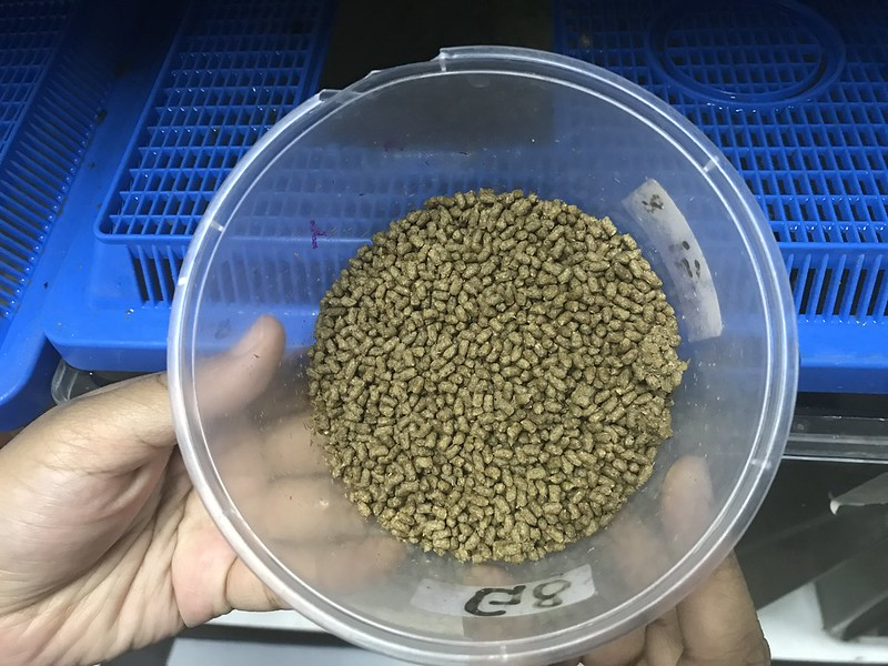 Pelleted feed used in a GIFT experiment using a novel feed ingredient. Photo by WorldFish.