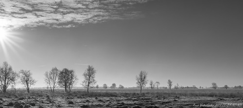 Cold morning sun in black and white