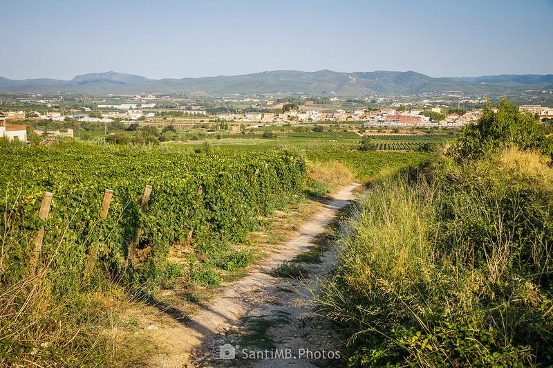 Viñedos de La Ràpita con la Serra de Montmell-Marmellar de fondo