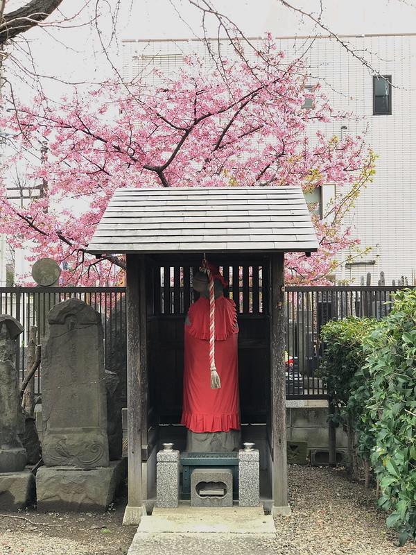 寳蔵院の河津桜