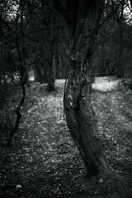@walking path 25