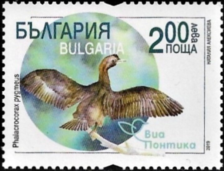 Bulgaria - Via Pontica Migratory Bird Route (February 1, 2019) Pygmy Cormorant (Phalacrocorax pygmeus)